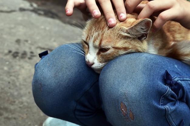 Meisje streelde een kat. het meisje pakte een dakloze kat op. wees met een kat.