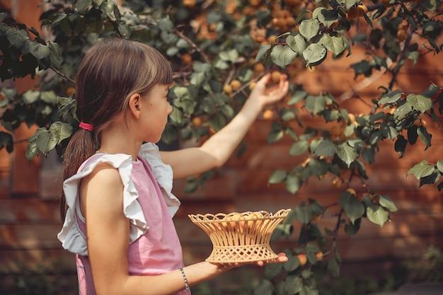 Meisje verzamelt rijpe abrikoos van een boom in zijn tuin.
