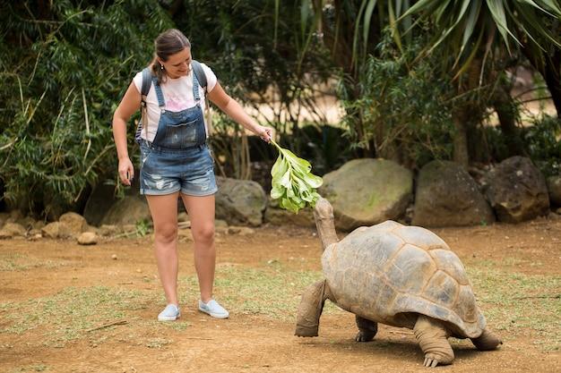 Meisje voedt gigantische schildpad. leuke activiteiten op mauritius.