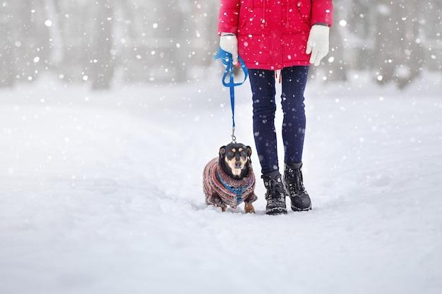 Meisjes in warme jassen en mutsen spelen in een winterpark met een hond tijdens een wandeling