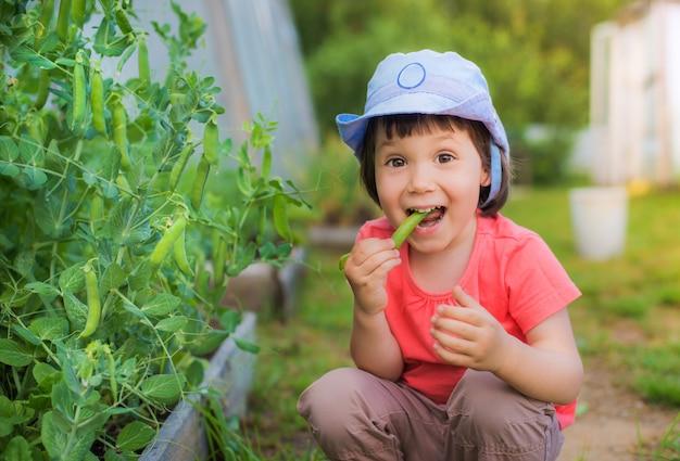 Meisjezitting die verse groene erwten op de tuin in de tuin eten.