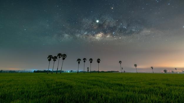 Melkweg galaxy met rij palmbomen in rijstvelden