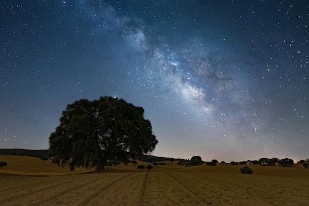 Melkweg over groot boomlandschap