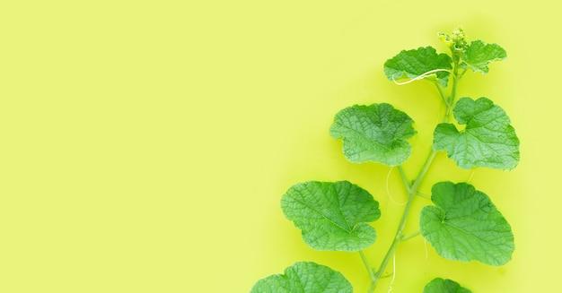 Meloenbladeren op groene achtergrond. ruimte kopiëren