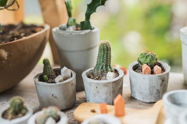 Meng cactus en scculent op de wooftafel