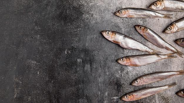 Menigte van tonijn kopie ruimte