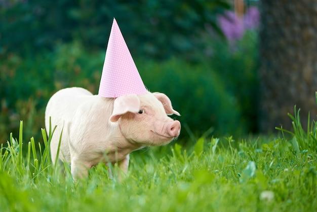 Mening die van roze piggy zich in tuin op groen gras bevindt en camera bekijkt.