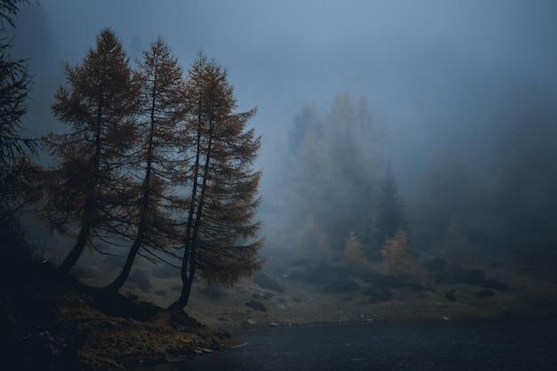 Mening over mistig meer mortirolo in berg