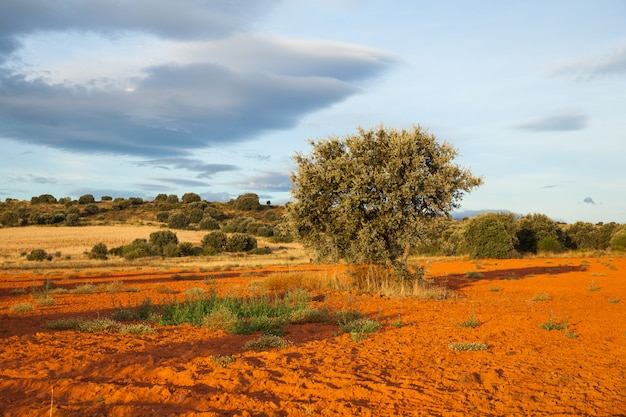 Mening van bomen in het spaanse platteland