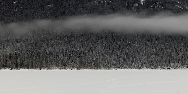 Mening van bomen in sneeuw behandeld bos, regionaal district van fraser-fort george, weg 16, yellowhea