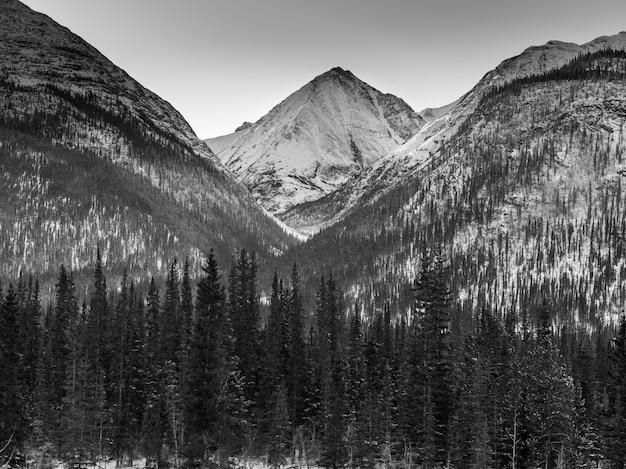 Mening van bomen met snowcapped berg op de achtergrond, de weg van alaska, noordelijke regionale bergen