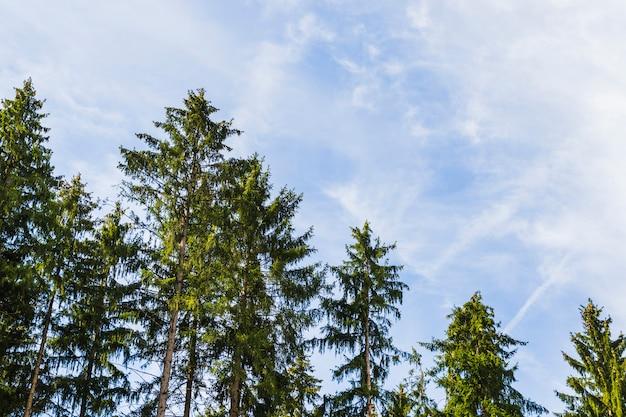Mening van bomen van binnenuit een bos