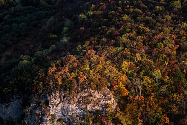 Mening van bos in berg in een zonsonderganglicht.