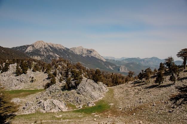 Mening van bos in hooglanden van turkije