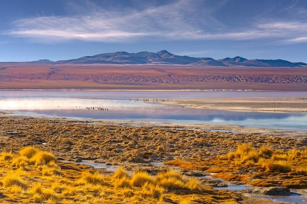 Mening van de rode laguna colorada in het nationale park van eduardo avaroa, bolivië.