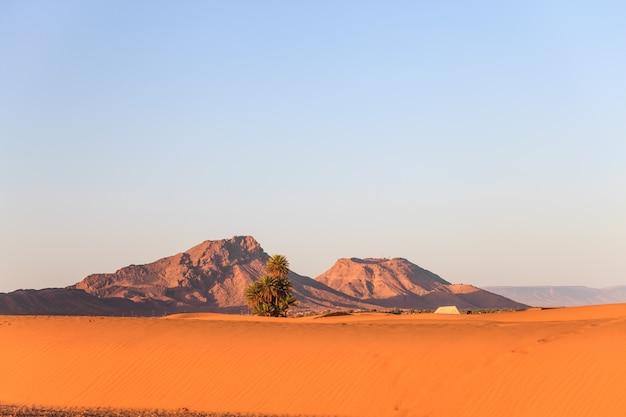 Mening van de woestijn van de sahara in het ochtendlicht, marokko