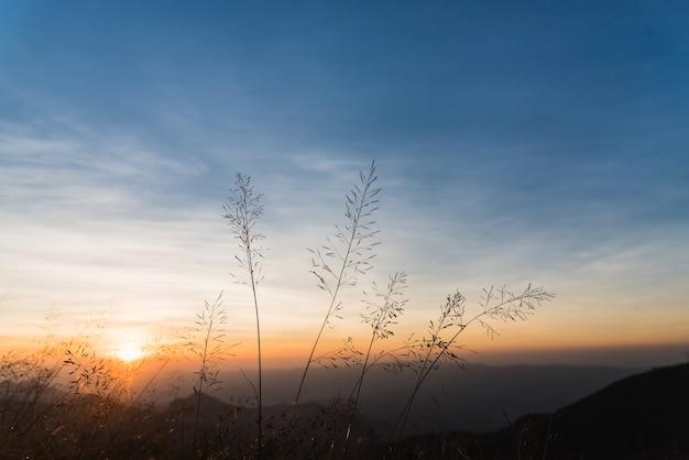 Mening van de zonsondergang van grasrijk bij berg