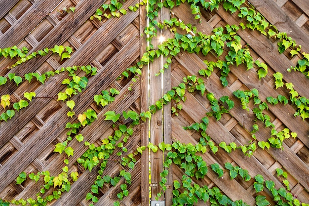 Mening van een houten poort met een klimplant waardoor de zon zichtbaar is.