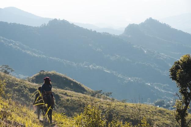 Mening van het paard van de reizigersrit op groen grasgebied met de meningslandschap van het berglandschap