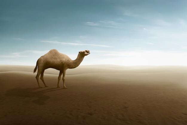Mening van kameel op de woestijnduinen