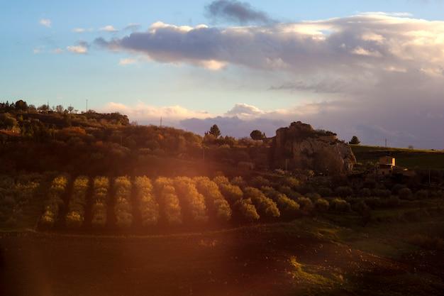 Mening van olijfbosje bij zonsondergang in leonforte