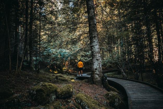 Mens die door welk binnenland van een bos loopt