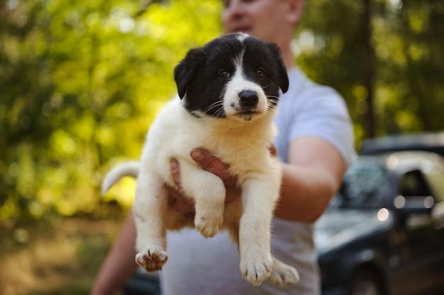 Mens die een leuk droevig zwart-wit puppy in het bos houdt