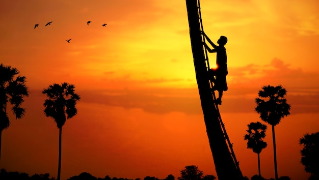 Mens die een suikerpalm beklimt om sap op het platteland te verzamelen