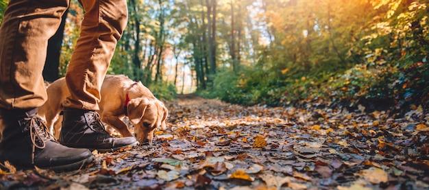 Mens die in de herfstbos wandelt met hond