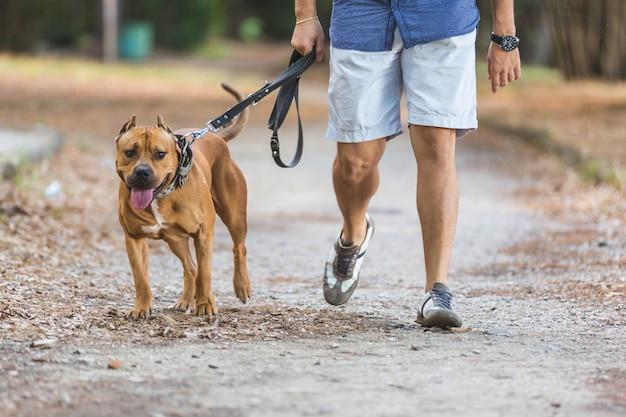 Mens die met zijn hond bij park loopt