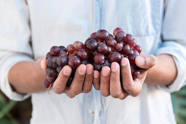 Mens die rode druiven in handen houdt
