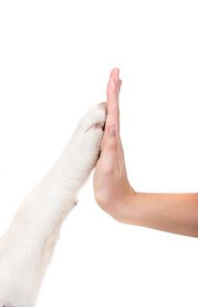Mens en hond houden handen vast. vriendschap tussen hond en mens.