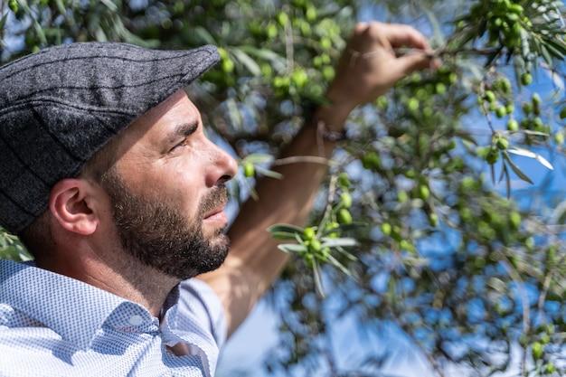 Mens met een baret die op en groene olijven van een boom let plukt