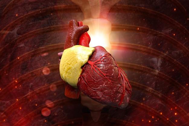 Menselijk hart in het lichaam 3d illustratie