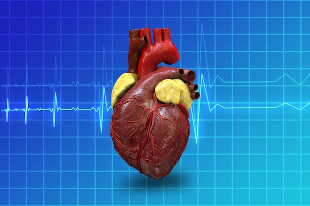 Menselijk hart op blauwe monitor achtergrond 3d illustratie