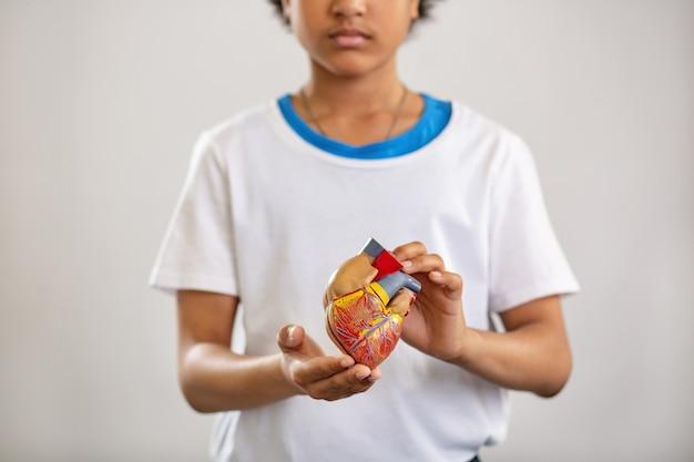 Menselijk hart. selectieve focus van een menselijk orgaan dat aan je wordt getoond