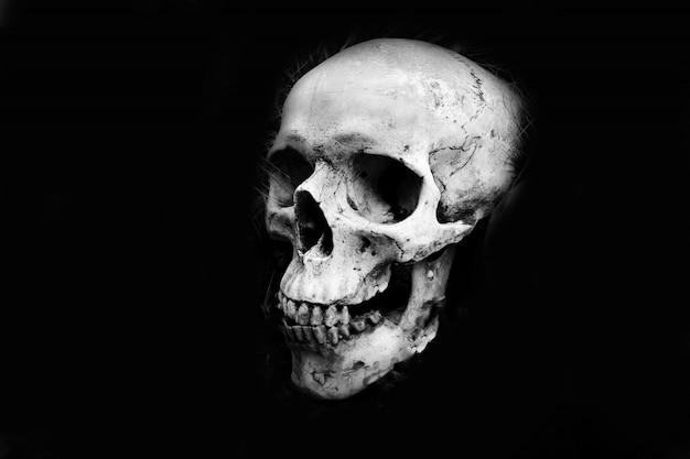Menselijk schedelhoofd - monochroom