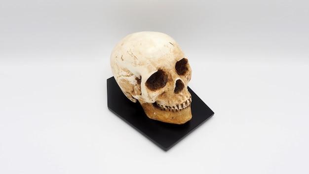 Menselijk schedelhoofdmodel gemaakt van kunsthars.