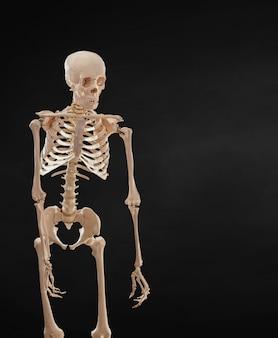 Menselijk skelet geïsoleerd op zwarte achtergrond.
