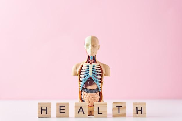 Menselijke anatomie mannequin met interne organen en word gezondheid op een roze achtergrond. medische gezondheid concept