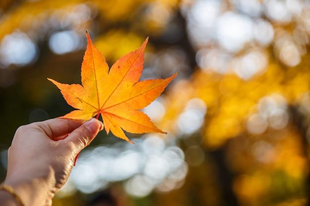 Menselijke hand die een rode bladeren van de de herfstesdoorn houden tegen de achtergrond van een blauwe hemel.