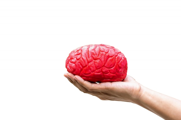 Menselijke hand met de medische hersenen rood in het geheugen