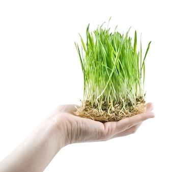 Menselijke hand met groen gras op wit