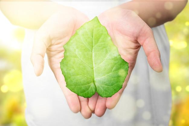 Menselijke hand met het groene blad.