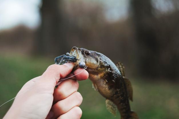 Menselijke hand met verse vis