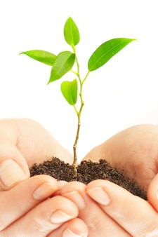 Menselijke handen houden en behouden een jonge plant