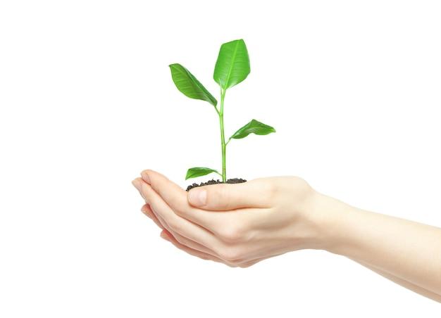 Menselijke handen met groene kleine plant nieuw leven concept