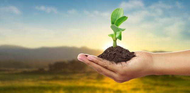 Menselijke handen met jonge plant van spruit. milieu dag van de aarde in handen van bomen die zaailingen kweken
