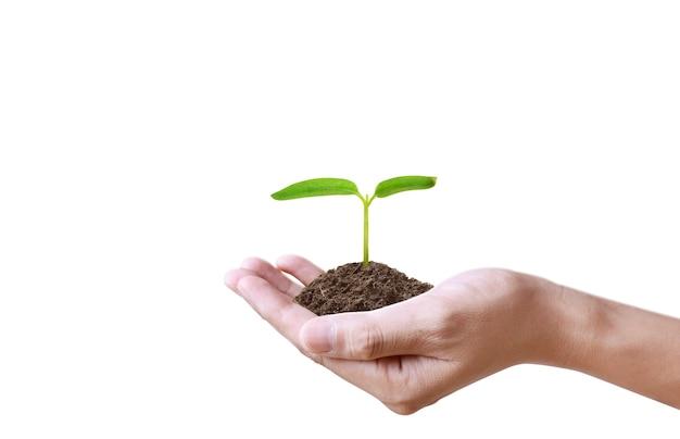 Menselijke handen met spruit jonge plant.