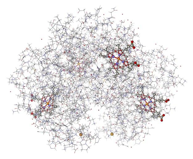 Menselijke hemoglobine (deoxyhemoglobine) met hemes weergegeven in ballen en stokken